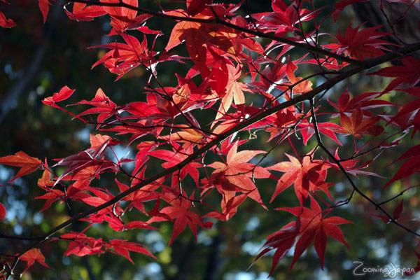autumn colors in Japan