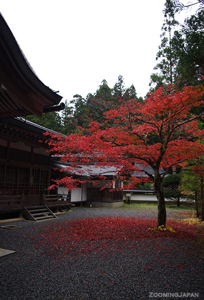 mount koya autumn leaves
