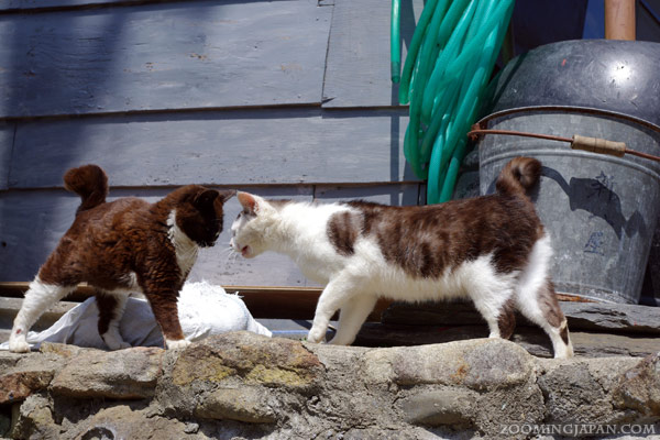Spring in Japan: cats of Cat Island, Tashirojima after the tsunami