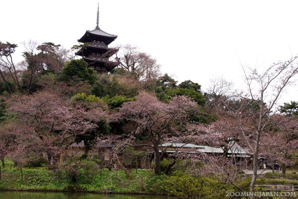 Spring in Japan: Sankeien Garden, Yokohama