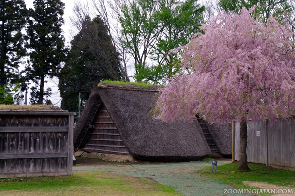 Spring in Japan: Ne Castle, Hachinohe, Aomori