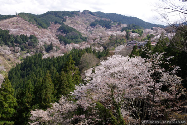 Spring in Japan: Mt. Yoshino, Nara