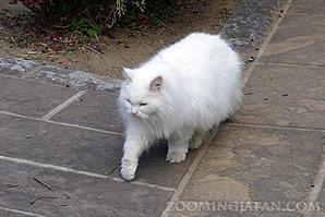 Cats in Hirado