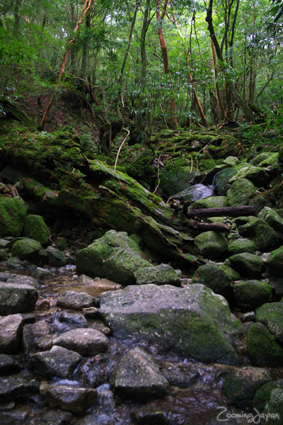 Kyushu winter vacation: Yakushima
