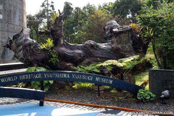 Yakushima Yakusugi Museum