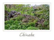 Chihana Castle