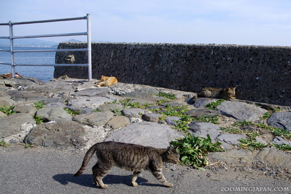 Ainoshima Cat Island Japan