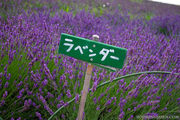 Hokkaido in Summer