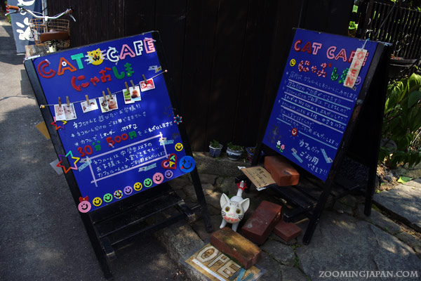 Cat Café Nyaoshima on Naoshima Island