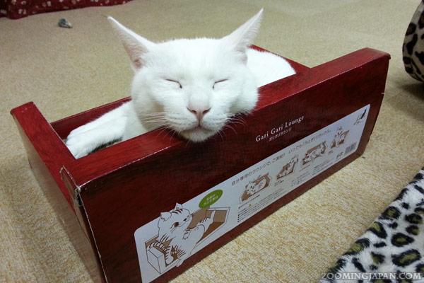 Cat Cafe Asakusa Neko-en