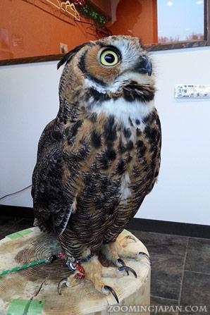 Owl Cafe in Harajuku