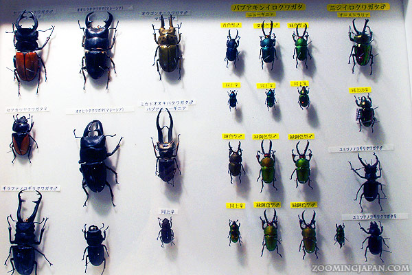 6 Dangerous or Annoying Insects (and Other Pests) in Japan