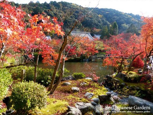 My Japanese Life series