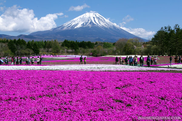 Mt. Fuji World Heritage Site