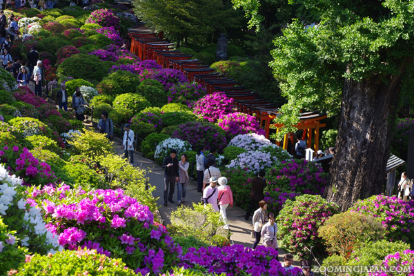 best time to travel to japan spring