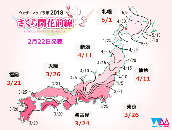 best time to view cherry blossoms in japan