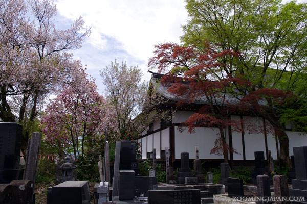 japan temple in spring