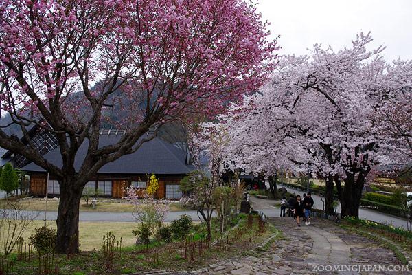 Top Cherry Blossom Spots in Tohoku and Hokkaido