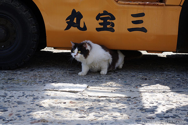 Cats on Tashirojima, Cat Island