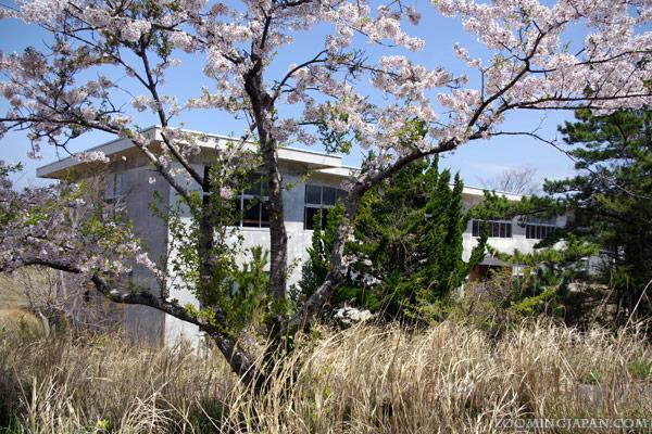 Tashirojima Elementary School, Cat Island