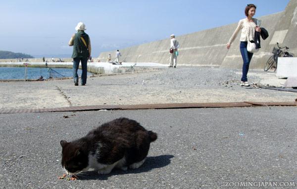 Tashirojima, Cat Island, Nitoda