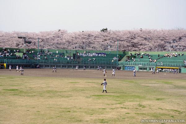 Yamagata Kajou Park, Japanese baseball game