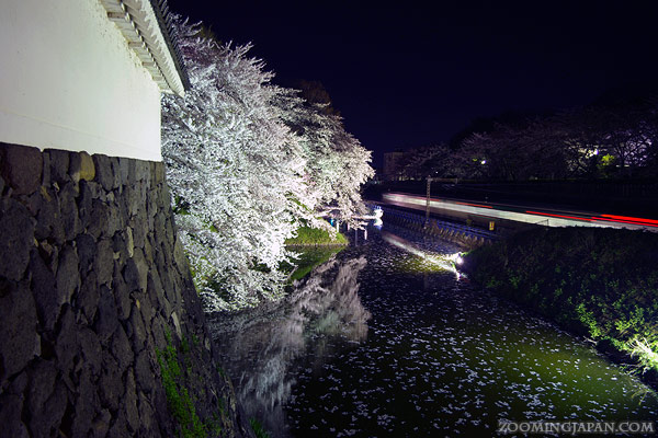 cherry blossoms at night lit up around Yamagata Castle