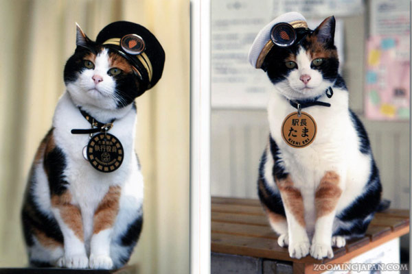 Station Master Tama The Cat » Zooming Japan