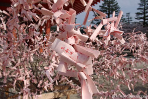 Pink omikuji to look like cherry blossoms in spring found at Heian Shrine in Kyoto