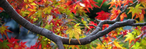 Autumn colors in Japan 2011