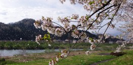 Hanafubuki in Kakunodate, Akita Prefecture