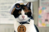 JR Kishi Station Master Tama The Cat