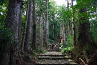 Kumano Kodo Pilgrimage Trails