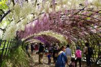 Kawachi Fuji Garden in Kitakyushu
