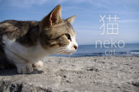 Funny Cat Expressions and Phrases in Japanese