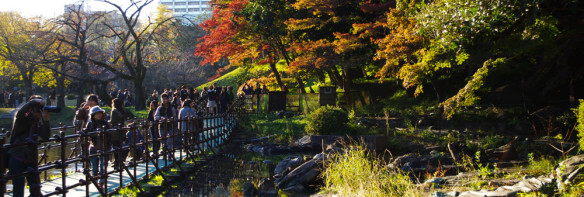 Autumn colors in Tokyo